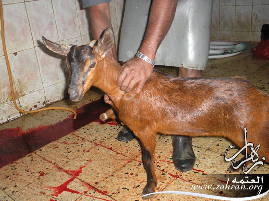 مندي اللحم(من الذبح الصحن) P3010004.jpg