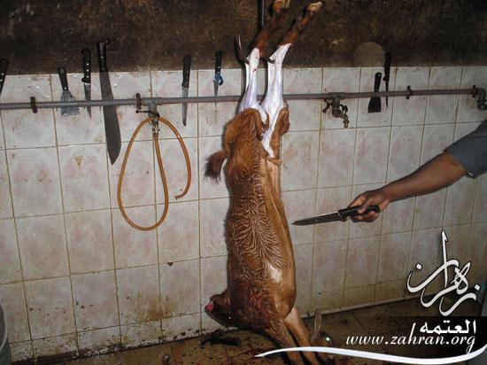 اللحم(من P3010011.jpg